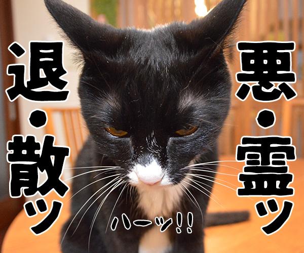陰陽師(其の二)いいヤツだから心配しなくても大丈夫? 猫の写真で4コマ漫画 3コマ目ッ