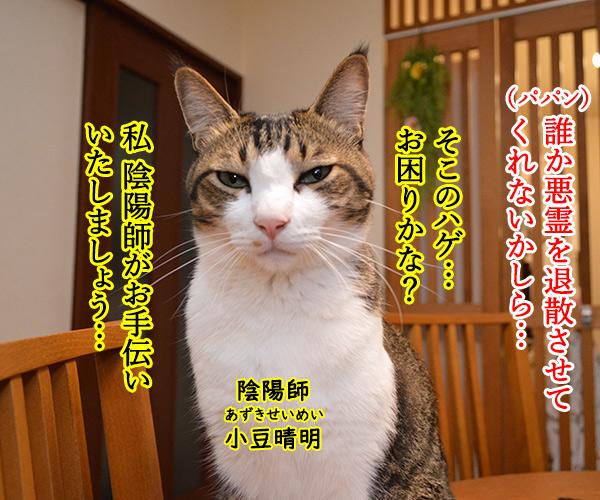 陰陽師(其の三)悪霊退治は陰陽師よねッ 猫の写真で4コマ漫画 1コマ目ッ