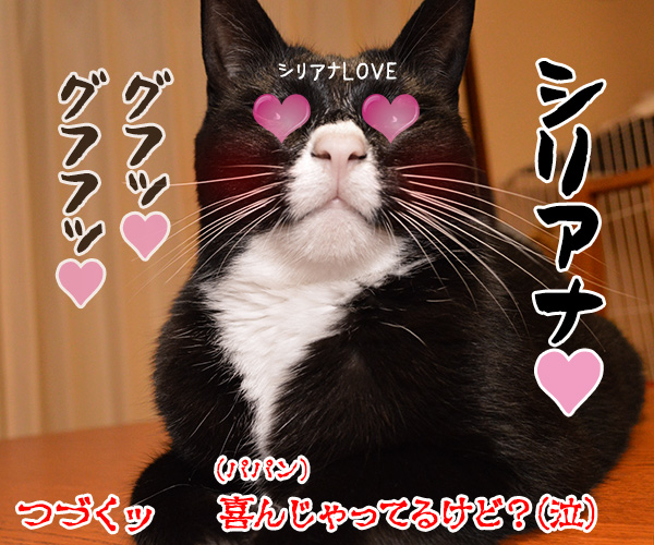 陰陽師(其の四)悪霊退散の必殺技なのよッ 猫の写真で4コマ漫画 4コマ目ッ