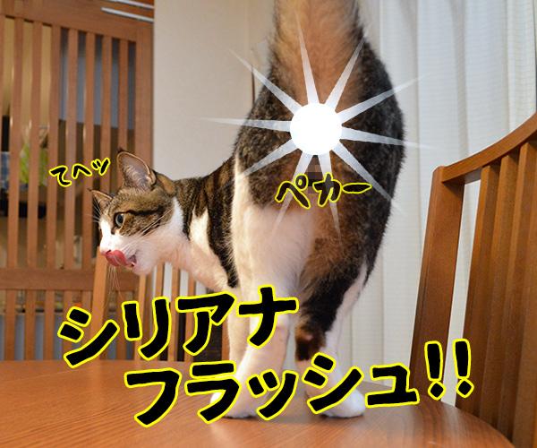 陰陽師(其の四)悪霊退散の必殺技なのよッ 猫の写真で4コマ漫画 2コマ目ッ