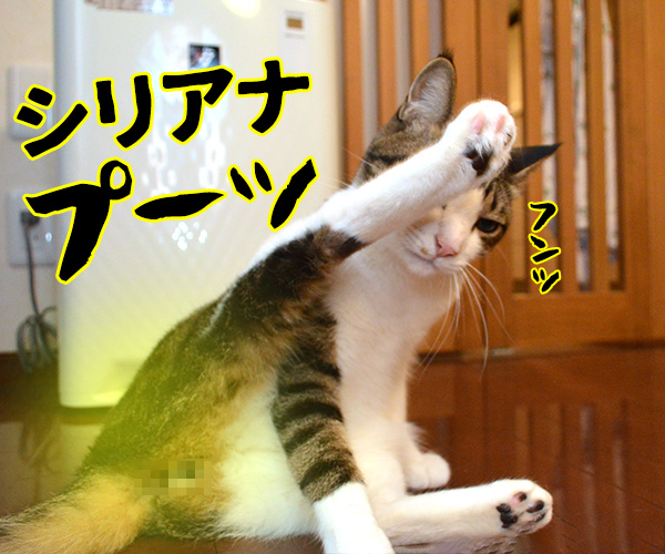 陰陽師(其の四)悪霊退散の必殺技なのよッ 猫の写真で4コマ漫画 3コマ目ッ