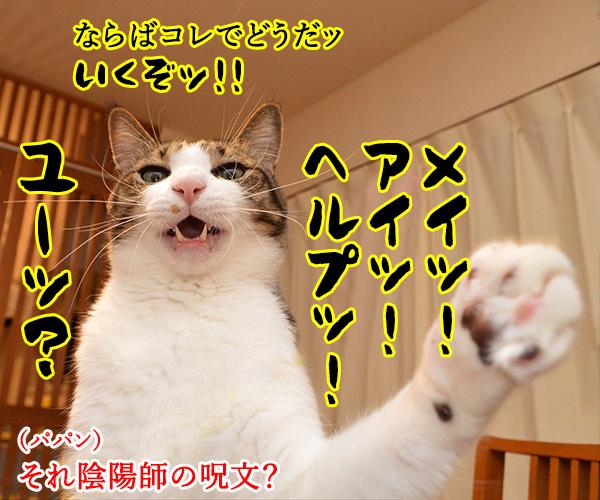 陰陽師(其の五)悪霊退散したけれど… 猫の写真で4コマ漫画 1コマ目ッ