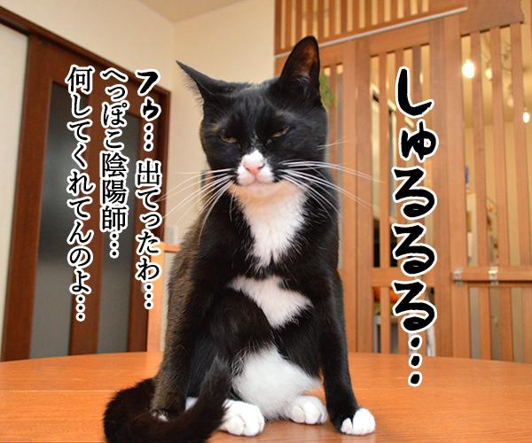 陰陽師(其の五)悪霊退散したけれど… 猫の写真で4コマ漫画 2コマ目ッ