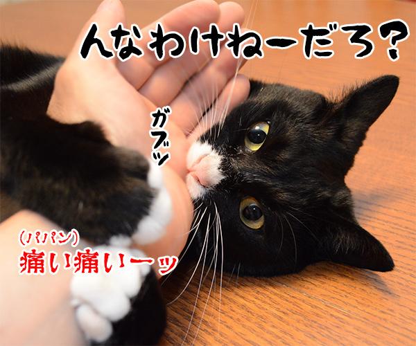 猫写真4コマで曲名クイズなのッ 猫の写真で4コマ漫画 3コマ目ッ