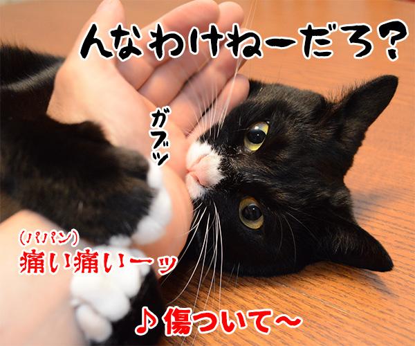 猫写真4コマで曲名クイズの答えは? 猫の写真で4コマ漫画 3コマ目ッ
