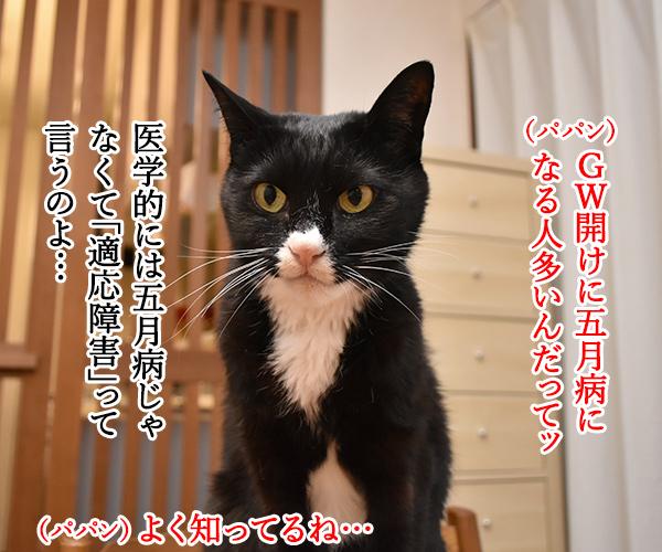 みんなー 五月病になってなーい? 猫の写真で4コマ漫画 1コマ目ッ