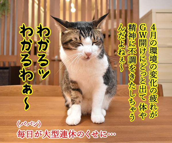 みんなー 五月病になってなーい? 猫の写真で4コマ漫画 2コマ目ッ
