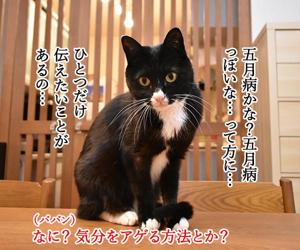 みんなー 五月病になってなーい? 猫の写真で4コマ漫画 3コマ目ッ