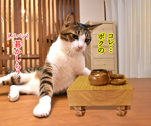 猫写真4コマで曲名クイズなのッ(ニ回目) 猫の写真で4コマ漫画 1コマ目ッ