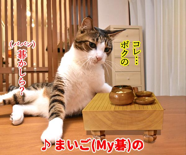 猫写真4コマで曲名クイズの答えは?(二回目) 猫の写真で4コマ漫画 1コマ目ッ