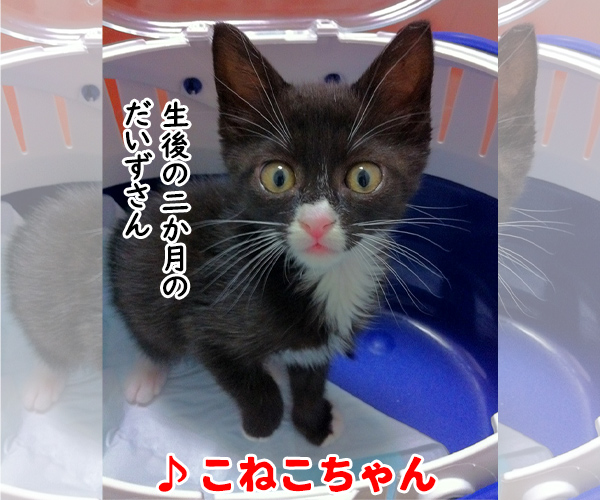 猫写真4コマで曲名クイズの答えは?(二回目) 猫の写真で4コマ漫画 3コマ目ッ