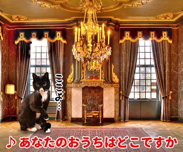 猫写真4コマで曲名クイズの答えは?(二回目) 猫の写真で4コマ漫画 4コマ目ッ