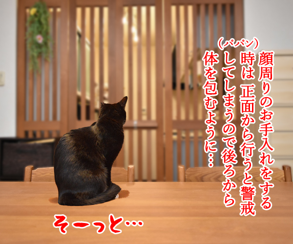 だいずさんの目ヤニをとるわよッ 猫の写真で4コマ漫画 3コマ目ッ