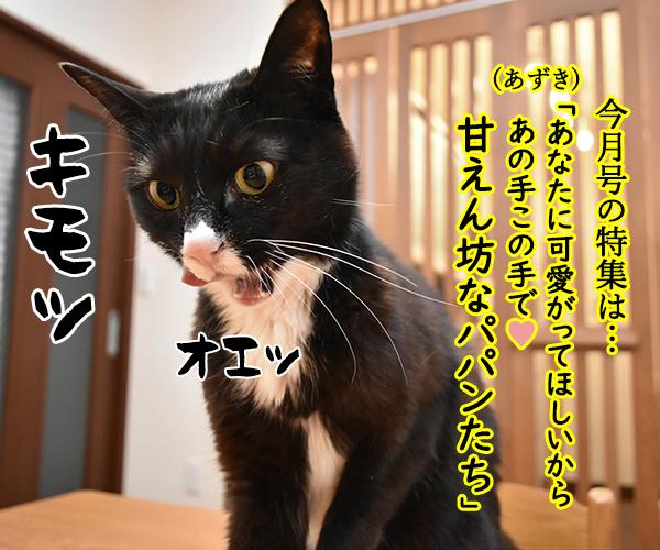 「パパンのきもち」6月号が届いたよッ 猫の写真で4コマ漫画 2コマ目ッ