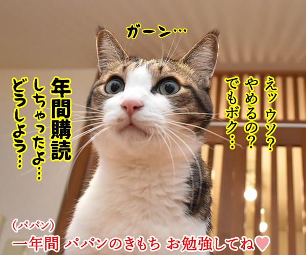 「パパンのきもち」6月号が届いたよッ 猫の写真で4コマ漫画 4コマ目ッ