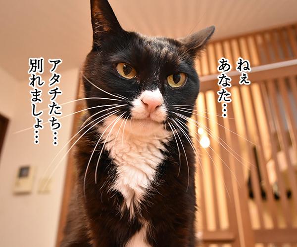 猫写真4コマで曲名クイズなのッ(三回目) 猫の写真で4コマ漫画 1コマ目ッ