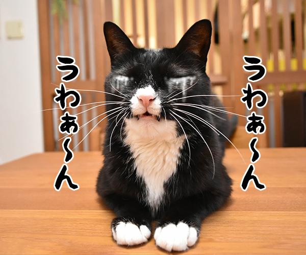猫写真4コマで曲名クイズなのッ(三回目) 猫の写真で4コマ漫画 2コマ目ッ