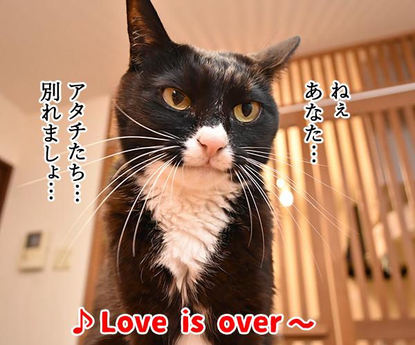猫写真4コマで曲名クイズの答えは?(三回目) 猫の写真で4コマ漫画 1コマ目ッ