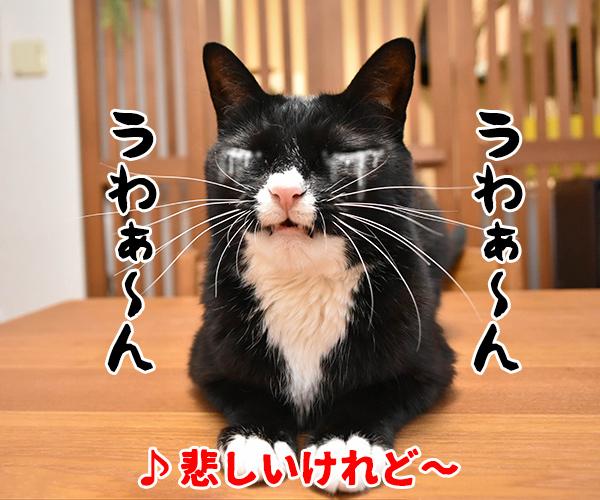 猫写真4コマで曲名クイズの答えは?(三回目) 猫の写真で4コマ漫画 2コマ目ッ