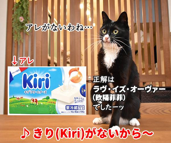 猫写真4コマで曲名クイズの答えは?(三回目) 猫の写真で4コマ漫画 4コマ目ッ