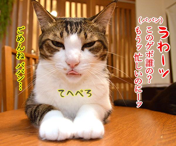 パパン ねぼうしちゃったのッ 猫の写真で4コマ漫画 2コマ目ッ