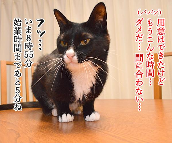 パパン ねぼうしちゃったのッ 猫の写真で4コマ漫画 3コマ目ッ