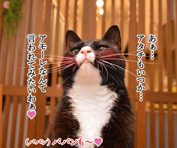 あなたはボクのアモーレ 猫の写真で4コマ漫画 2コマ目ッ