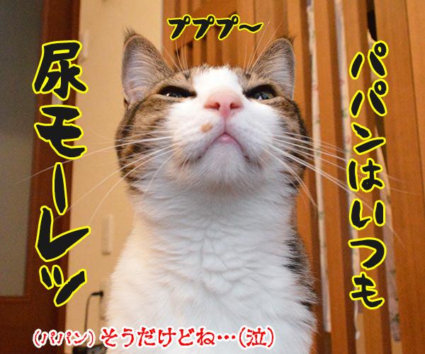 あなたはボクのアモーレ 猫の写真で4コマ漫画 4コマ目ッ