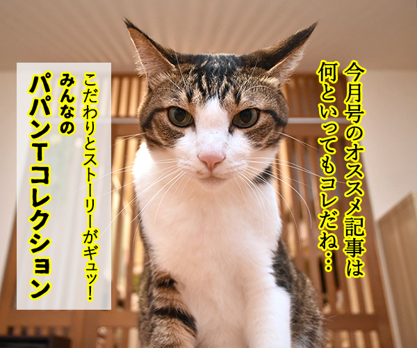 「パパンのきもち」7月号が届いたよッ 猫の写真で4コマ漫画 2コマ目ッ