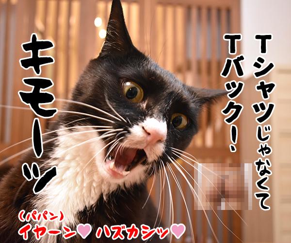 「パパンのきもち」7月号が届いたよッ 猫の写真で4コマ漫画 4コマ目ッ