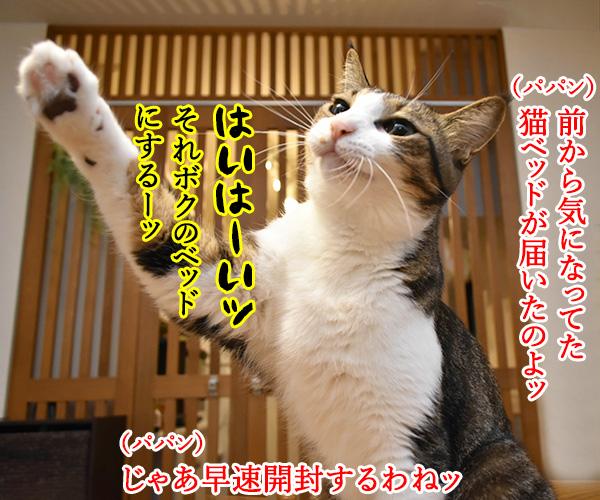 ドラえもんのタイムマシンベッドが届いたのよッ 猫の写真で4コマ漫画 1コマ目ッ