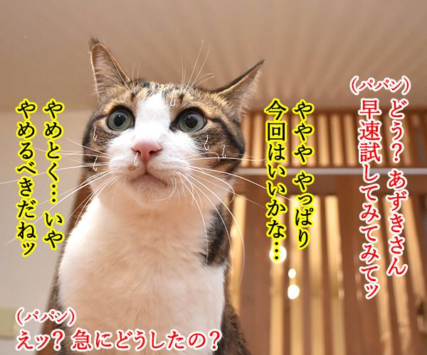 ドラえもんのタイムマシンベッドが届いたのよッ 猫の写真で4コマ漫画 3コマ目ッ