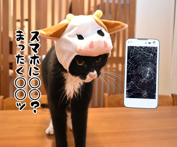 猫写真4コマで曲名クイズなのッ(四回目) 猫の写真で4コマ漫画 3コマ目ッ