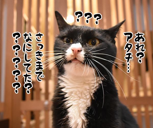 猫写真4コマで曲名クイズなのッ(四回目) 猫の写真で4コマ漫画 4コマ目ッ