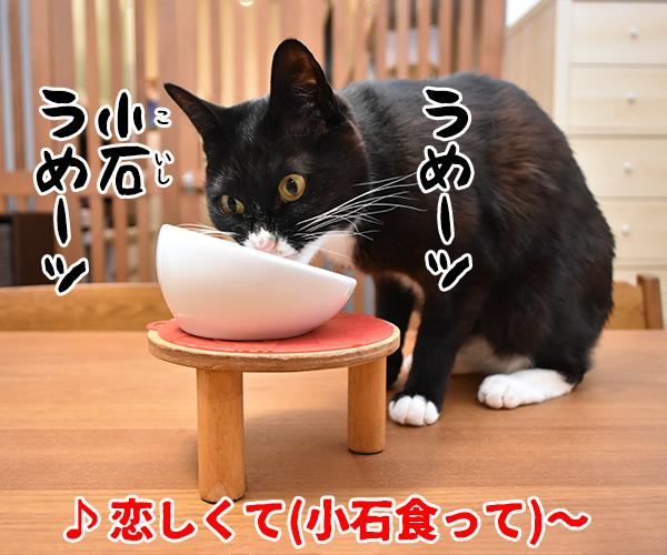 猫写真4コマで曲名クイズの答えは?(四回目) 猫の写真で4コマ漫画 1コマ目ッ