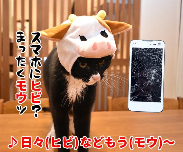 猫写真4コマで曲名クイズの答えは?(四回目) 猫の写真で4コマ漫画 3コマ目ッ