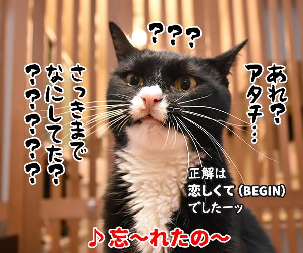猫写真4コマで曲名クイズの答えは?(四回目) 猫の写真で4コマ漫画 4コマ目ッ