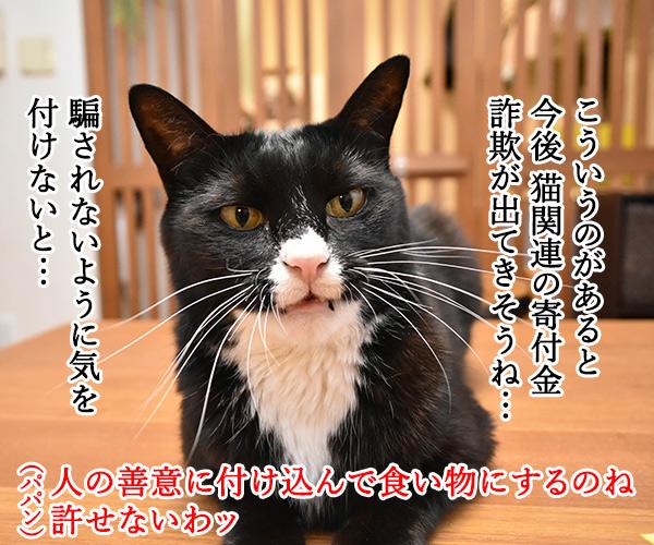 猫の治療薬開発の寄付に総額1億2千万円なんですってッ 猫の写真で4コマ漫画 2コマ目ッ