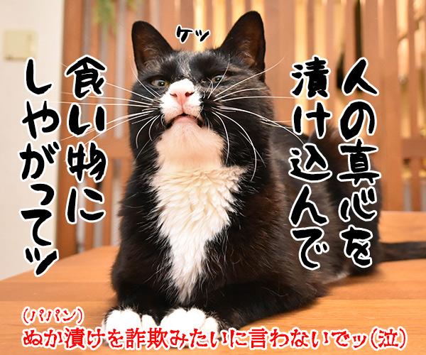 猫の治療薬開発の寄付に総額1億2千万円なんですってッ 猫の写真で4コマ漫画 4コマ目ッ