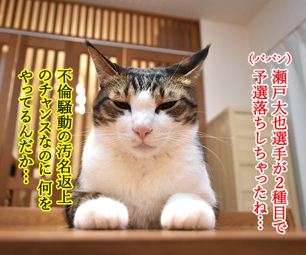 瀬戸大也選手ーッ ガンバッテーッ 猫の写真で4コマ漫画 1コマ目ッ