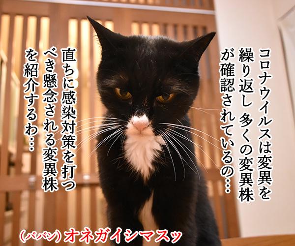 新型コロナの「変異株」を教えてあげるわよッ 猫の写真で4コマ漫画 1コマ目ッ