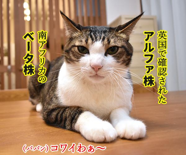 新型コロナの「変異株」を教えてあげるわよッ 猫の写真で4コマ漫画 2コマ目ッ