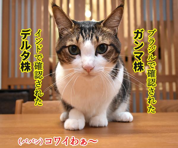 新型コロナの「変異株」を教えてあげるわよッ 猫の写真で4コマ漫画 3コマ目ッ