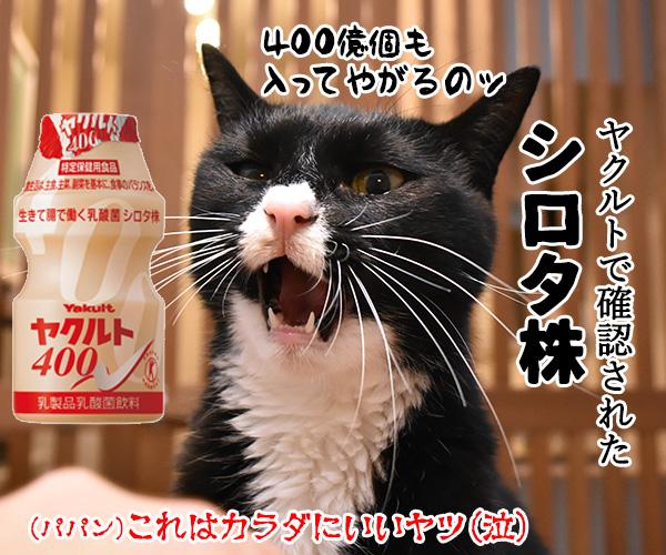 新型コロナの「変異株」を教えてあげるわよッ 猫の写真で4コマ漫画 4コマ目ッ