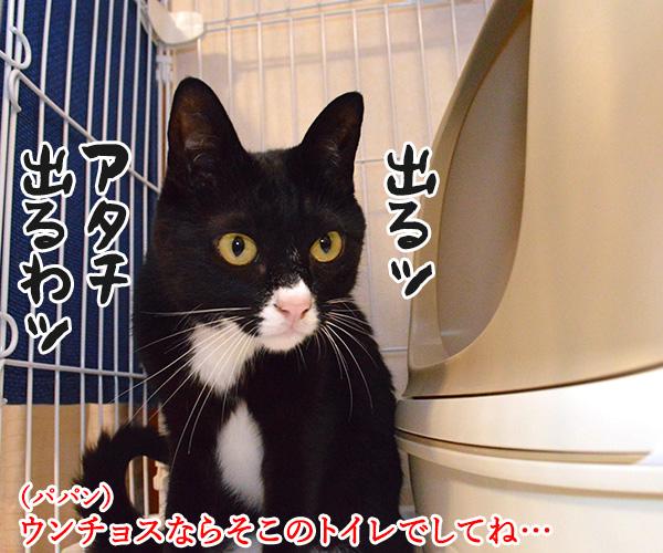 アタチ出るッ 出るわよッ 猫の写真で4コマ漫画 1コマ目ッ