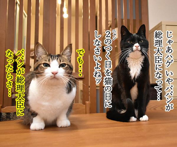 アタチ出るッ 出るわよッ 猫の写真で4コマ漫画 3コマ目ッ