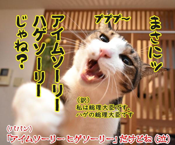 アタチ出るッ 出るわよッ 猫の写真で4コマ漫画 4コマ目ッ